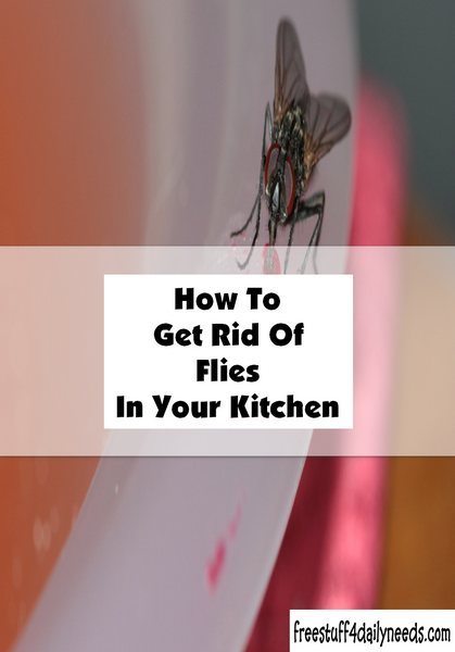 how to get rid of flies in your kitchen free stuff 4 daily needs. Black Bedroom Furniture Sets. Home Design Ideas